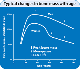 bone_graph