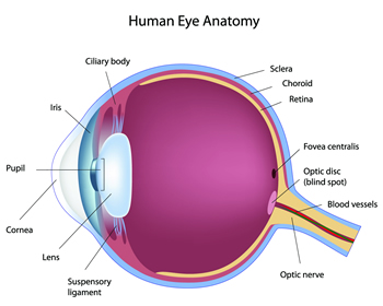 eyesceme